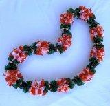 Peppermint Carnation(ペパーミント カーネーション)